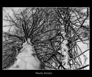 Światowy Dzień Drzewa