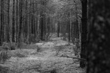 Bieprzański Park Narodowy_reportaż z pleneru_17